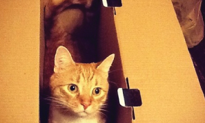 Cats in Boxes (15 Photos)