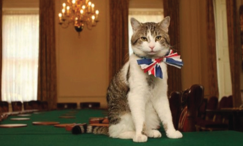 Fancy Cats with Bow Ties (18 Photos)