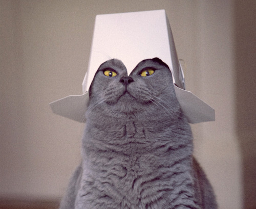 Chinese Cat In The Hat