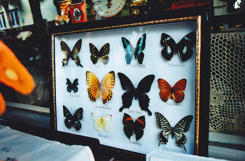 Style-Save-Us-Butterflies