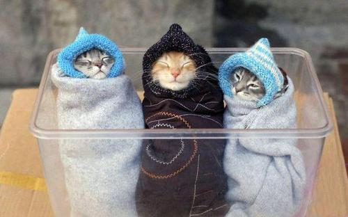 Style-Save-Us-Cat-Wraps