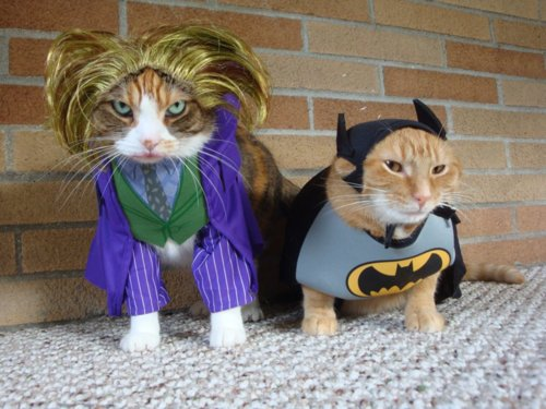 Style-Save-Us-Catman-And-Jokes