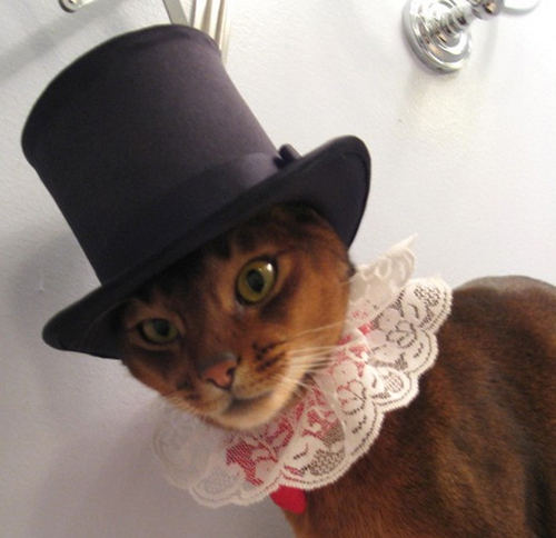 Style-Save-Us-Dandy-Cat