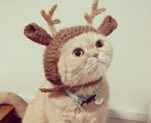 Style-Save-Us-Deer-Cat
