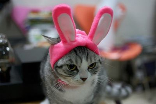Style-Save-Us-Pink-Bunny