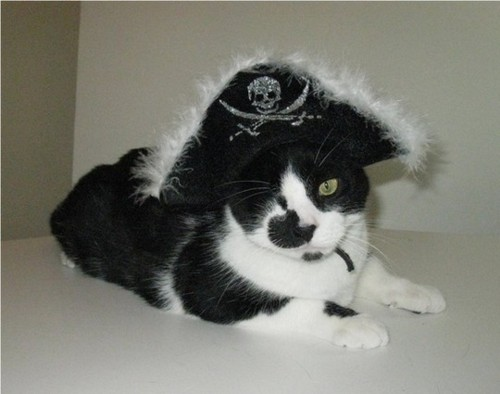 Style-Save-Us-Pirate-Cat