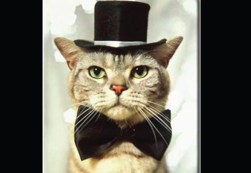 Cat With Top Hat And Bow Tie