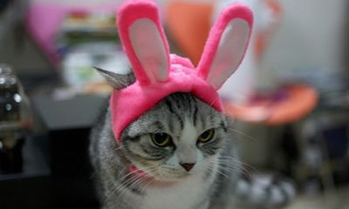 Cats in Hats (15 Photos)