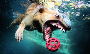 Dogs Under Water: 12 Amazing Photos