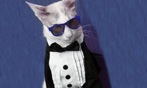 Oh Hell Yeah: Cats in Suits (15 Photos)