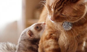Animal Friendships Too Cute to Miss (15 Photos)