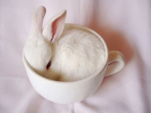 style-save-us-bunny-in-a-cup