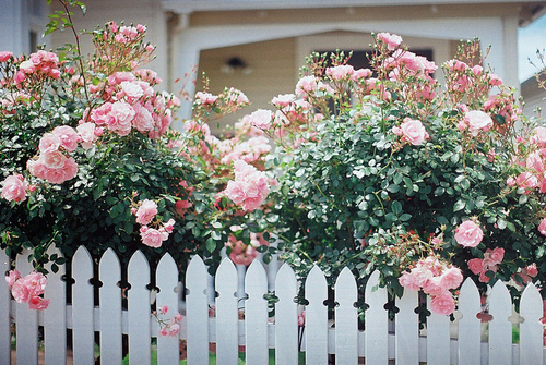 style-save-us-picket-fence