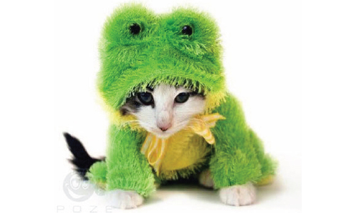 Cats Dressed as Other Animals (14 Photos)