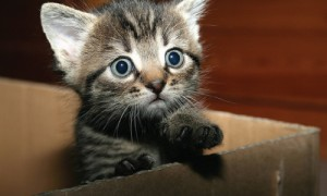 Kitten Delivery Service At Your Call