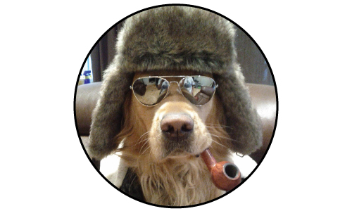 This Dog is More Stylish Than You